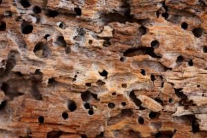 alimento-termitas